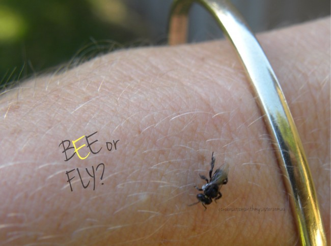 conversationswithmysister_Recognising Native Stingless Bees