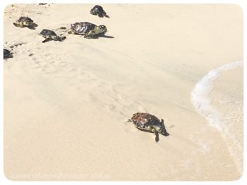 Exciting Turtle Tales from Saadiyat: Rescue Rehabilitate Release