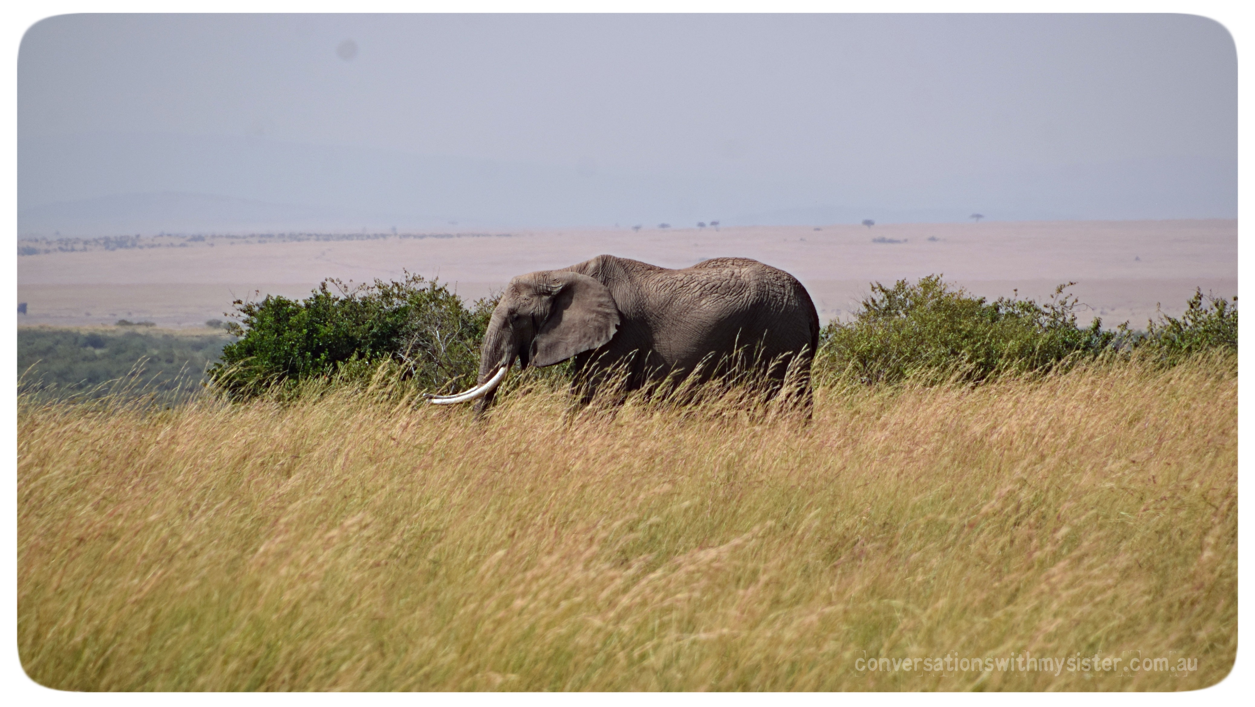 An African Safari in the Masai Mara - with Kids_conversationswithmysister.com.au